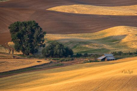 Farm house wheat field Palouse.jpg