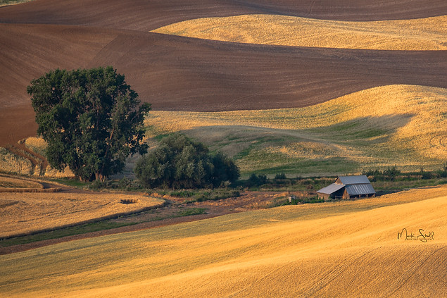 Farm house wheat field Palouse.jpg