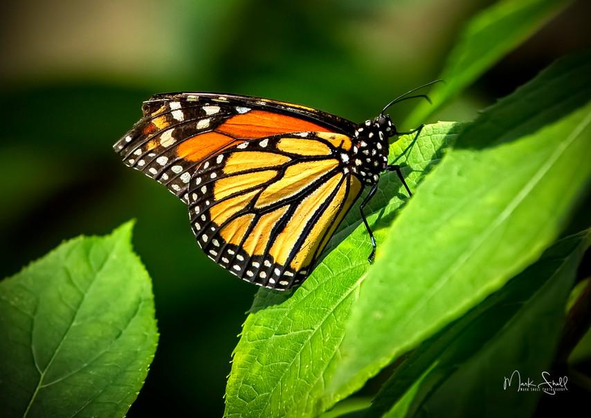 Monarch Perch post.jpg