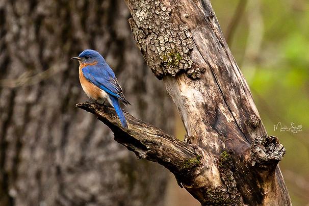 blue bird left