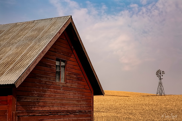 Red Shed and distant windmill.jpg