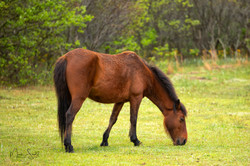horse grazing early post