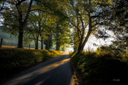 Cades Cove road entrance sunrise
