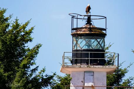 Bald Eagle on light house.jpg