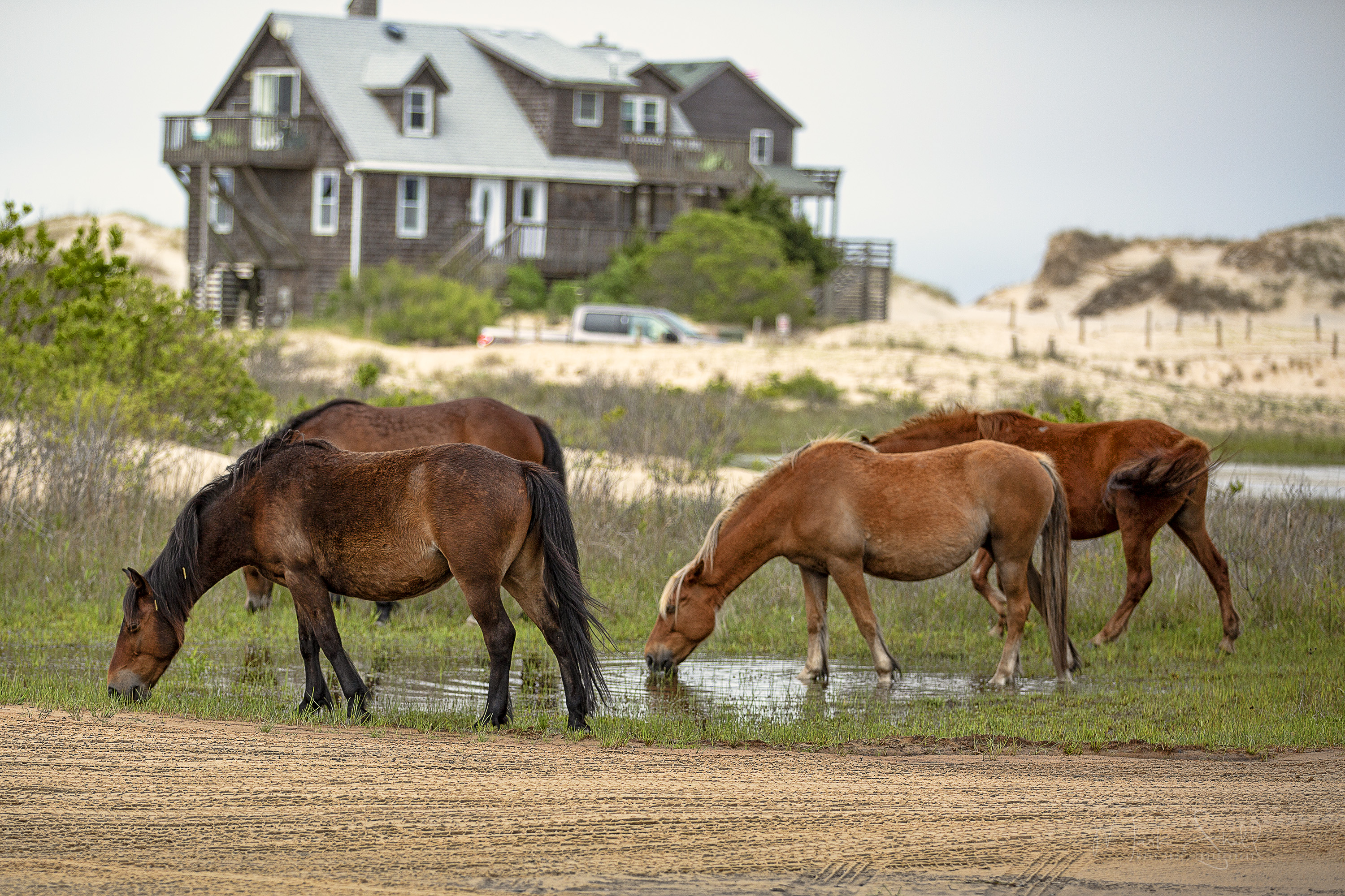 Corolla Beach house mustangs