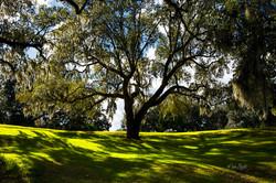 Southern Plantation Middleton estate AB