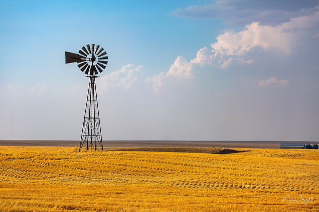 Harvested wheat windmill.jpg