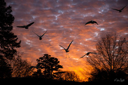 Sunset silhouette cranes post