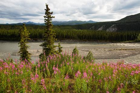 Wilderness Lodge AK