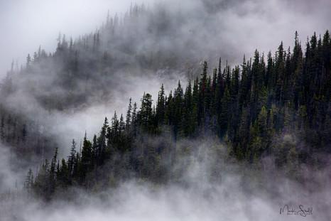 Misty Tree Line Jasper