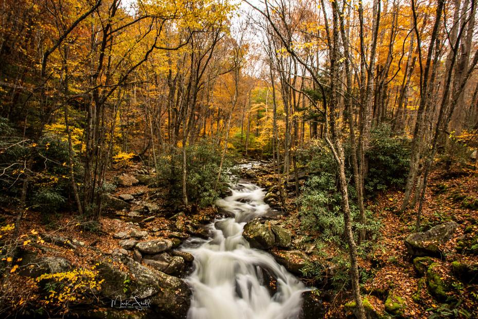 Tremont Creek fall colors.jpg