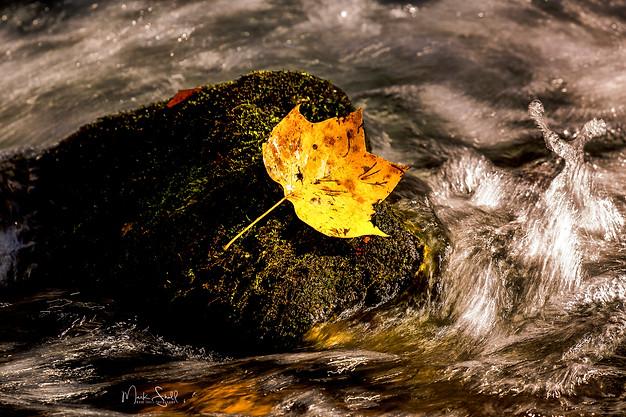 Fall leaf rock stream post.jpg