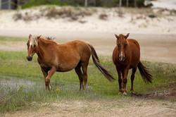 horse Spanish Mustang pair post