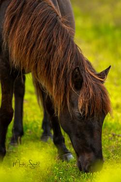 horse Spanish Mustang head post
