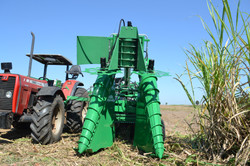 Harvester that cuts raw cane