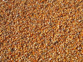 Milho: Hora de trocar mercado físico por futuro