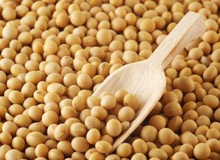 Apesar da chuva, primeiras colheitas surpreendem na maior região de soja do país