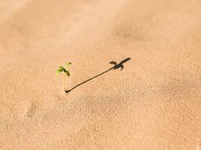 Técnica faz areia do deserto virar terra fértil