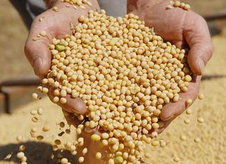 Brasil deve colher 238,7 milhões de toneladas de grãos