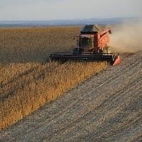 Produção de grãos bate recorde