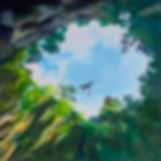 Look Up, Fei Lu Art