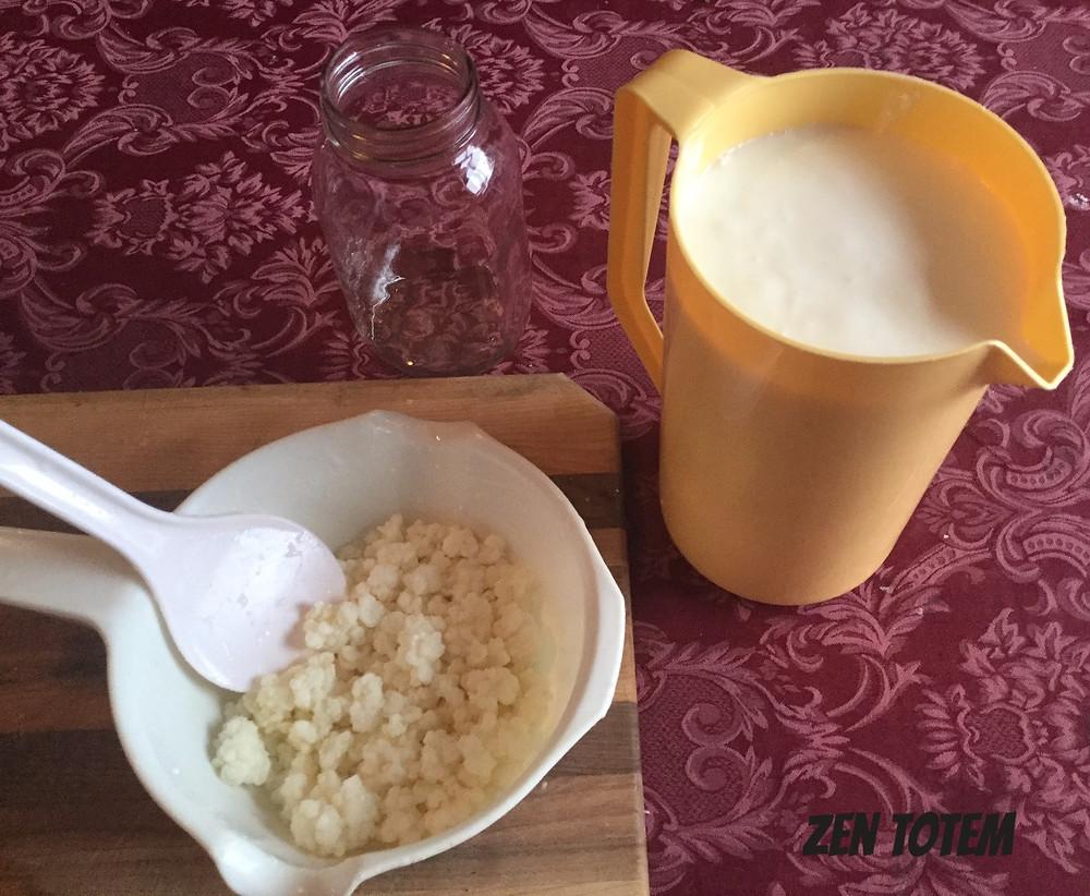 Grains de kéfir et kéfir de lait obtenu par la fermentation des grains