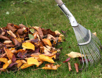Spring/Fall Yard Cleanup