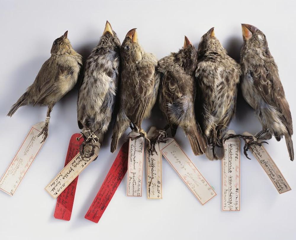 Zetaesse. Diego Ferrante. Dal 1970 a oggi in Nord America sono scomparsi quasi 3 miliardi di uccelli. Senza poter leggere i presagi scritti dagli uccelli in volo, come tornare a immaginare un futuro?