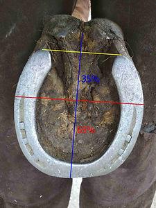 4 PP.jpg