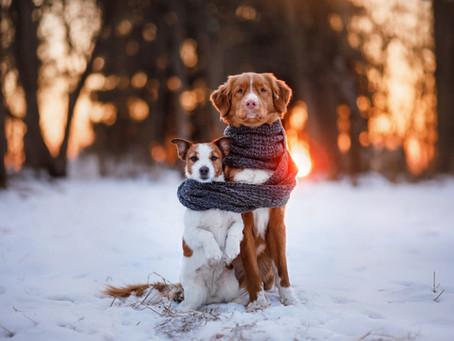 Los perros y el frío: los cuidados que siempre debes tener en cuenta