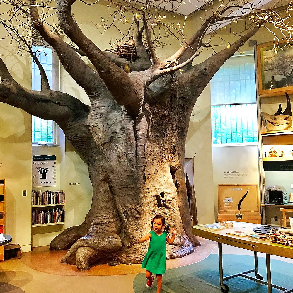 The Discovery Room, American Museum of Natural History for kids, young scientists, Curious G and Me, Indoor fun guide for kids