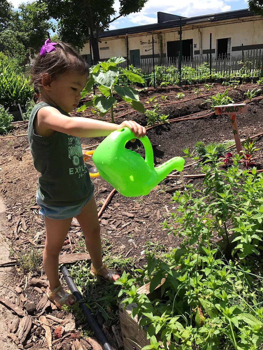 Grow NYC, Teaching Farm, Governor's Island, Governor's Island Teaching Farm