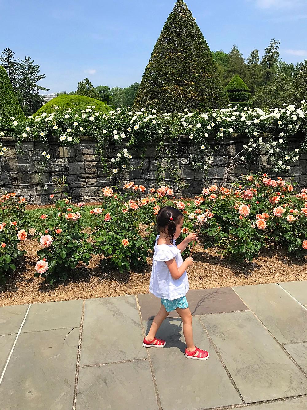 Curious G and Me, Longwood Gardens, topiary garden, children's garden, Philadelphia, Philadelphia gardens, Philadelphia with kids, rose gaden