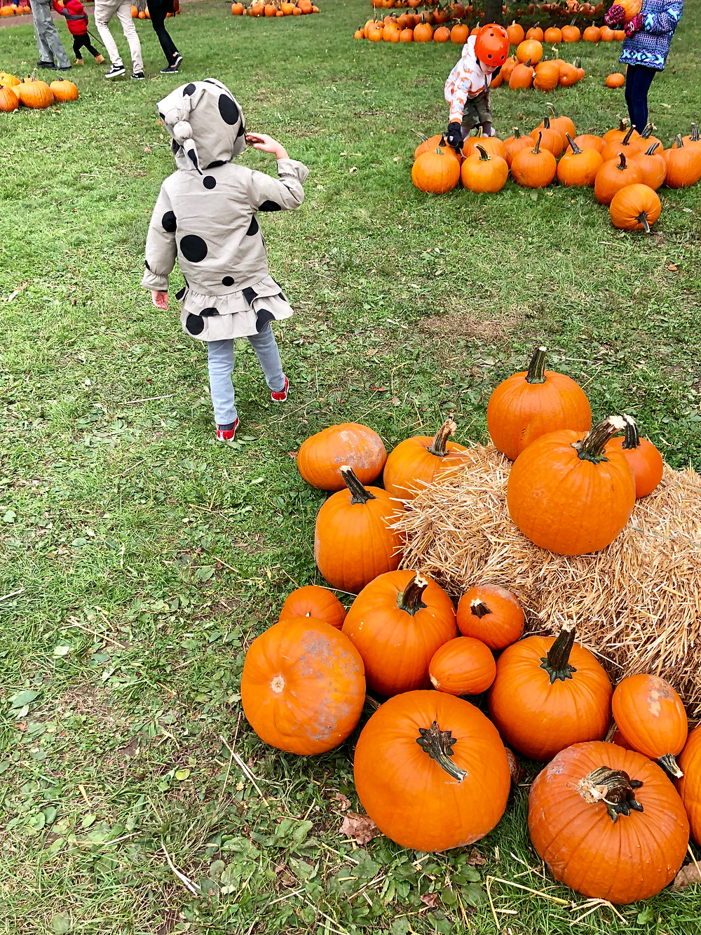 Free Fall Events, Free Options for Halloween, and Autumn Weekend Getaways for New York City Families, pumpkin patch, Governor's Island, Pumpkin Point