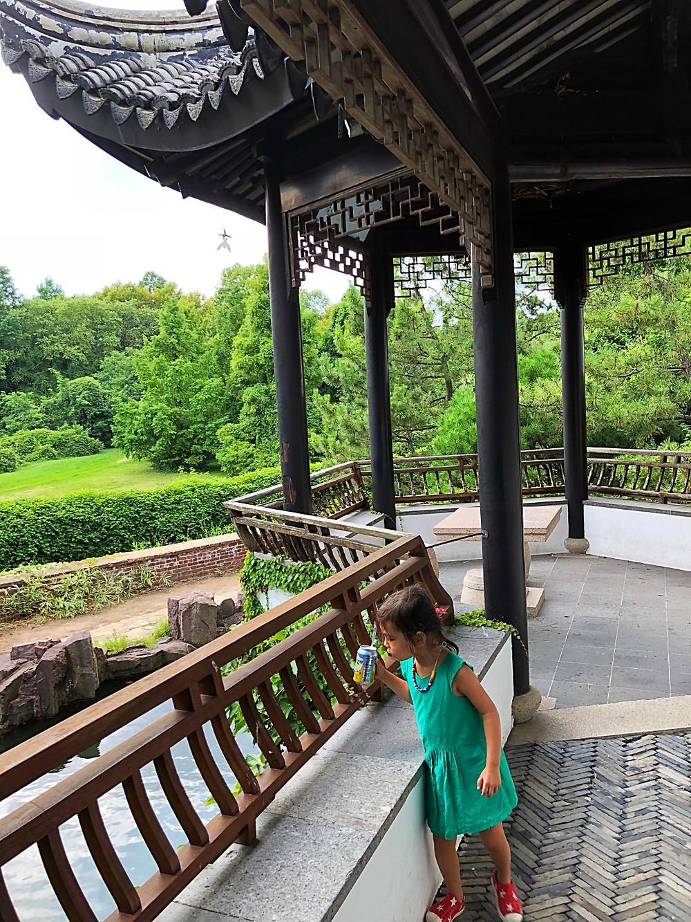 Snug Harbor, New York Chinese Scholar's Garden, bamboo forest