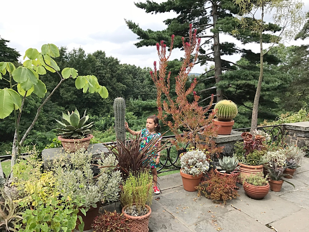 Wave Hill, NYC Botanical Garden, kids in nature, NYC hidden gem, Family Art Project, Curious G and Me