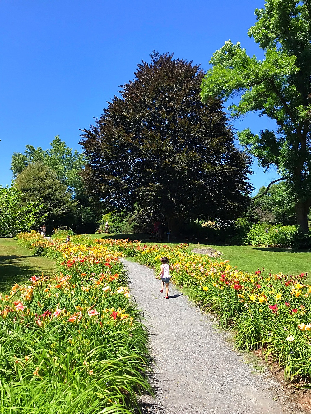 Berkshire Botanical Garden, Berkshires with kids, Curious G and Me