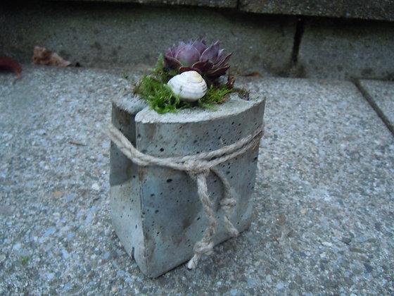 Betongefäss bepflanzt