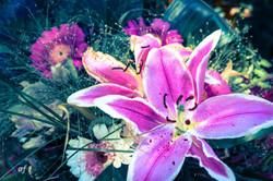 fiori inizio estate