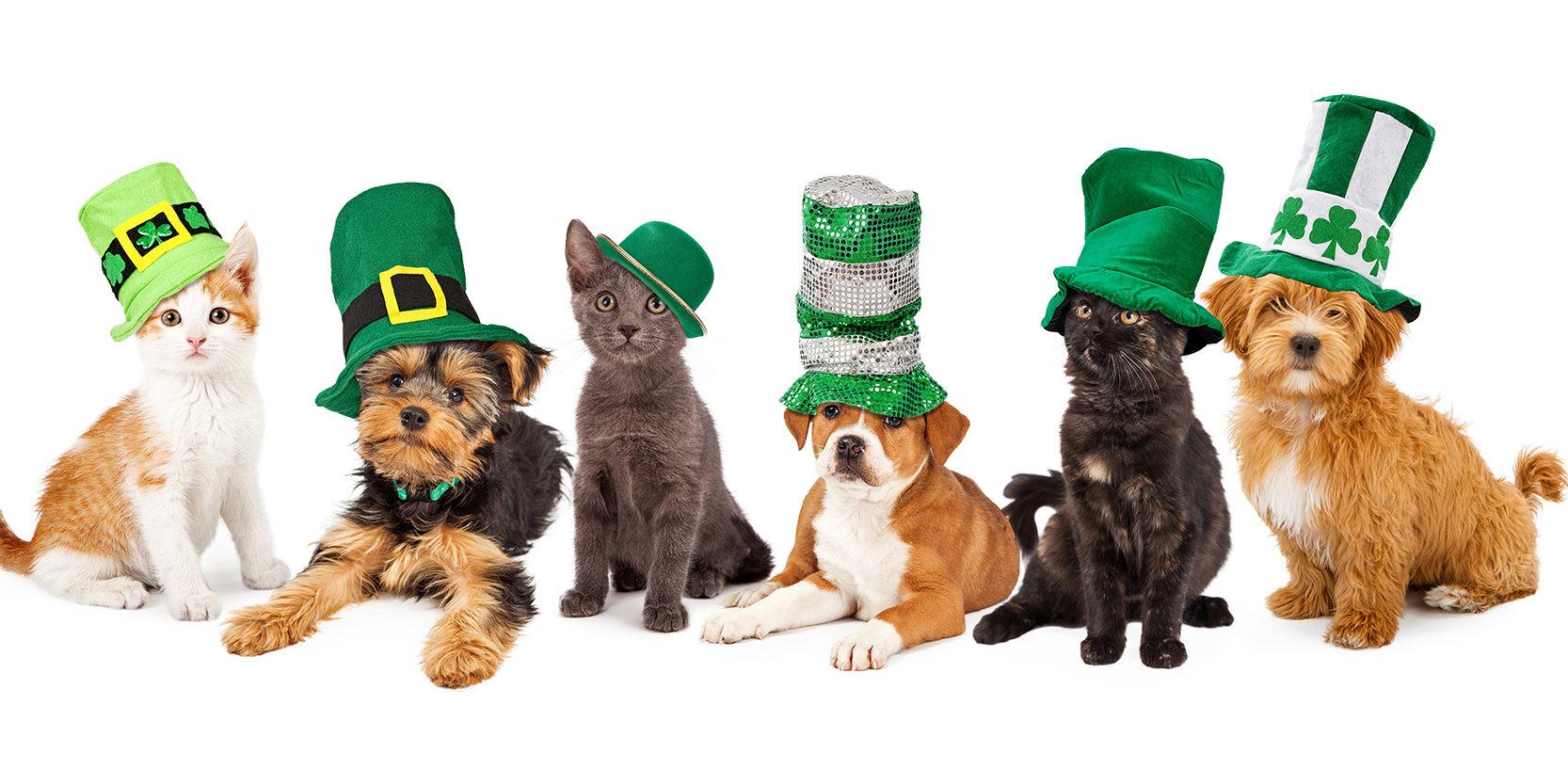 St-Patricks-Day-dogs_small-1666x833.jpg