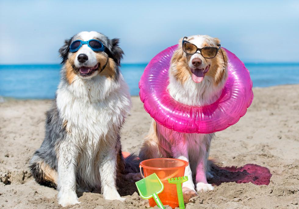 dog-days-of-summer.jpg