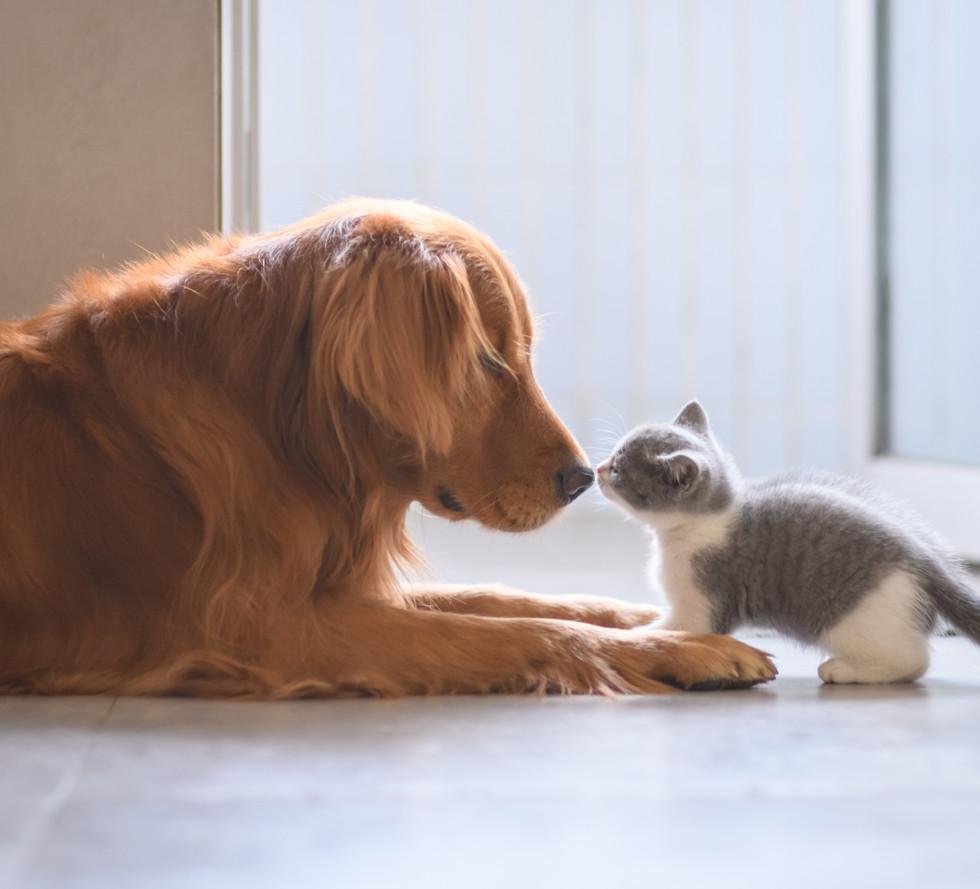 dog-and-kitten-meeting.jpg
