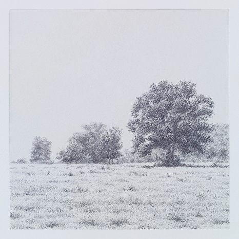 Trees at the Ranch
