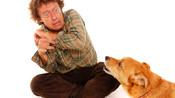 Fél a gyerekem a kutyától! Járjon kutyás terápiára?