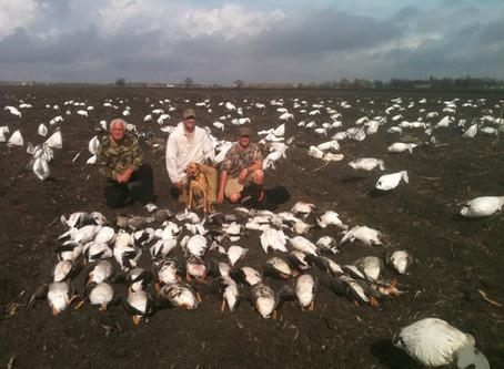 Where Did The Texas Geese Go?