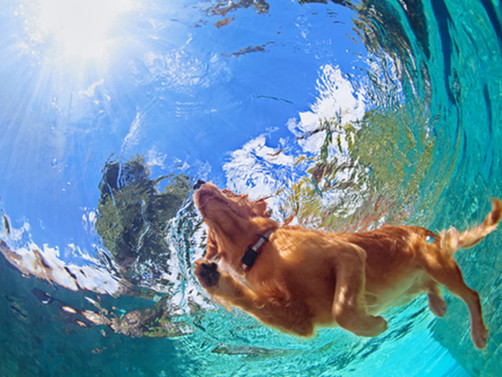 Cleaning Tips for Dog Hair in the Pool!