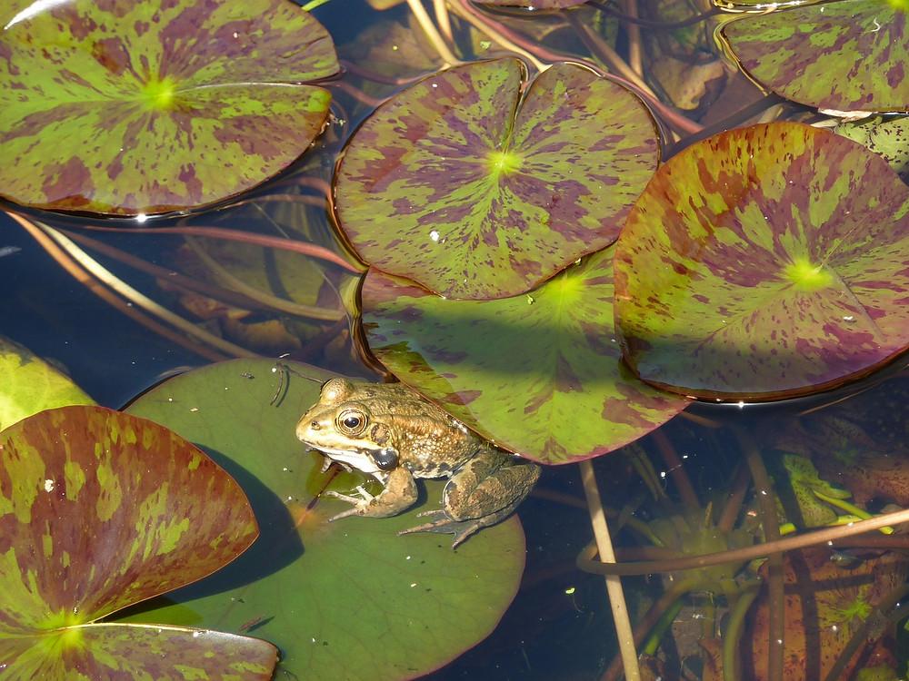 frog-435860_1280.jpg