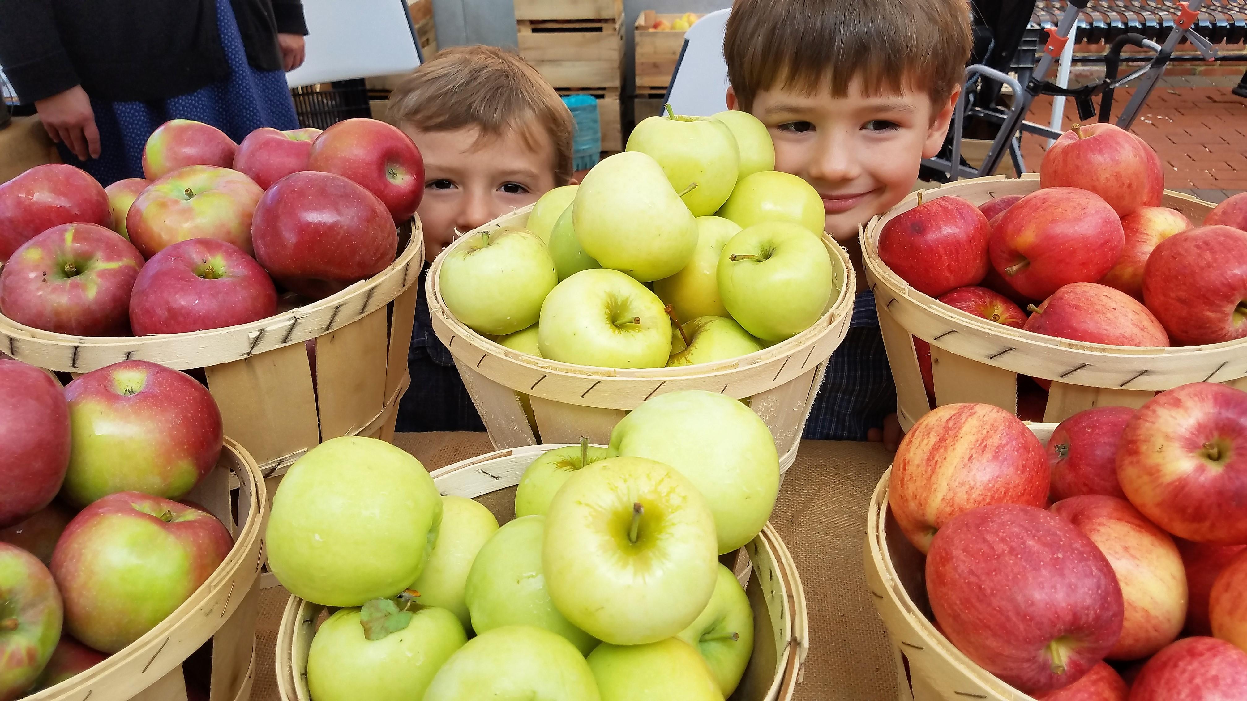 Harvest Hills apples