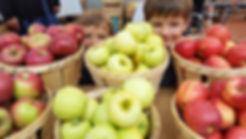 Harvest Hills apples.jpg