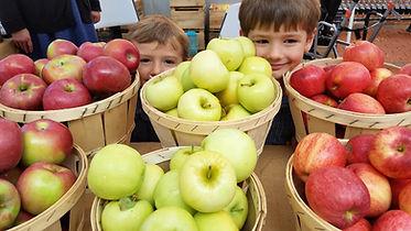 Harvest Hills apples.jpg